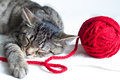 Sleepy gray cat and red ball of wool on white background Royalty Free Stock Photo