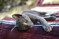 Sleepy gray cat a young grey laying on bench covered with colorful rug on a sunny day outside in the garden Stock Photo