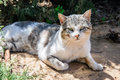 Sleepy homeless cat enjoy noon sunshine in garden white ang grey Stock Images