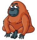 Sleepy orangutan on white background