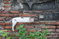 Sleepy white cat laying down on the temple wall Royalty Free Stock Photo