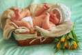 Sleepyhead little girl asleep in wicker basket Stock Image