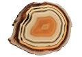 Slice of an agate gem stone
