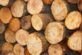 Sliced wooden logs Stock Photo