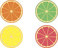 Slices of citrus fruits Royalty Free Stock Photos