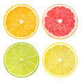 Slices of citrus fruits isolated on white Stock Photography