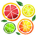 Slices of fresh citrus fruits isolated watercolor painting on white background Stock Photo
