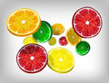Slices of fresh citrus fruits orange lime lemon and grapefruit falling and flying vector illustration on gray background Royalty Free Stock Photos