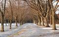 Title: Slippery Pedestrian Walkway in Winter, Toronto, Ontario, Canada