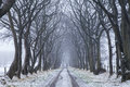 Slippery road surrounded by very old avenue of trees in frosty and snowy day Stock Photos