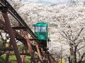 Slope car passing through tunnel of cherry blossom (Sakura) Royalty Free Stock Photo