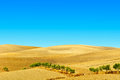 Sloping hills plowed of spain in the autumn Royalty Free Stock Images