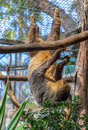 Sloth hanging on a tree in its cage Stock Photo