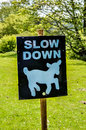 Slow down sheep sign against green background Royalty Free Stock Images