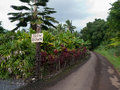 Slow down sign on narrow road typical maui with reflecting the attitude of the locals about life in general beautiful tropical Royalty Free Stock Photos