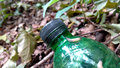 Slug on the bottle in the woods a bright summer day