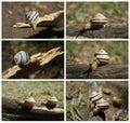 Slugs Royalty Free Stock Photo