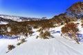 SM Perish High Mount Trees Royalty Free Stock Photo