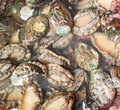 Small abalone abaloneï œabalone is a single shell in marine mollusks Royalty Free Stock Photo