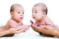 Small babies twins boys on parental hands Royalty Free Stock Photo