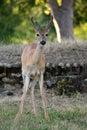 Small baby elk Royalty Free Stock Photo