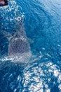 Niño ballena barco Oeste