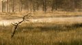 Small bare tree in a marsh Stock Images