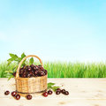 Small basket full of cherry berries and green grass Royalty Free Stock Image