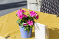 Small beautiful bouquet of pink flowers for restaurant table decoration