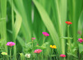Small beautiful flowers in the garden over green grass background Stock Photography
