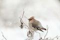 Pájaro en frío
