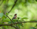 Small birdie on a branch surrounded with foliage Stock Image