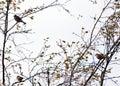 Small birds