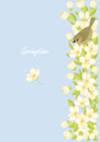 Small birds and spring blossoming branches