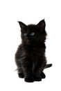 Small black kitten on white background Royalty Free Stock Image