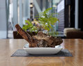 Small bonsai tree on the wood table Stock Photo