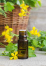 Small bottle of celandine infusion