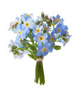 Small bouquet of Forget-me-nots isolated on white background Royalty Free Stock Photo