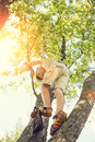 Small boy has fun climbing on the tree Royalty Free Stock Photo