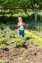 Small boy tasting the fresh vegetables standing in sunshine growing in family vegetable patch Royalty Free Stock Photos