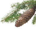 Small branch of spruce Stock Photo