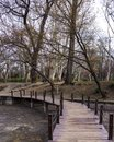 Small bridge over river in forest in vajdahunyad budapest