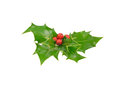 Small bunch of freshly picked holly isolated on white background Stock Photography