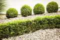Small bushes Royalty Free Stock Photography