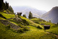 Small cabins in a swiss mountain valley two and narrow trail meanders through beautiful green grass and spring wildflowers this Stock Image