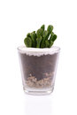 Small cactus in glass container. Royalty Free Stock Photo