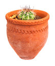 Small cactus planted on a red clay pot Royalty Free Stock Images