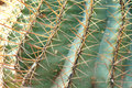Small cactus plants horn detail Royalty Free Stock Photo