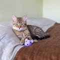 Small cat in the bed Royalty Free Stock Photography