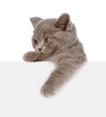 Small cat with empty board. isolated on white background Royalty Free Stock Photo